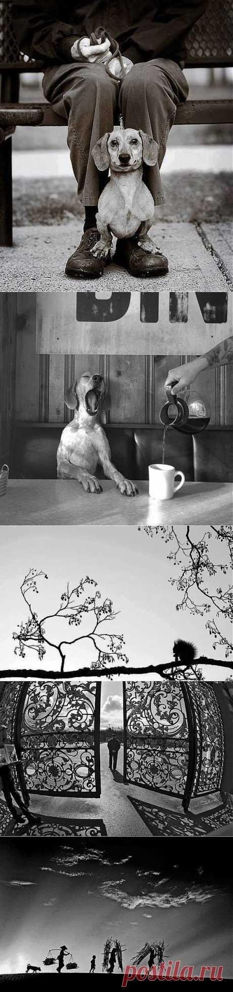 Магнетизм чёрно-белого фото