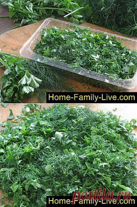 Кулинарные рецепты Зелень на зиму - пошаговый фоторецепт - заготовить зелень на зиму заморозкой