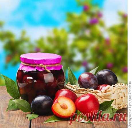 Как сохранить урожай слив — 6 соток
