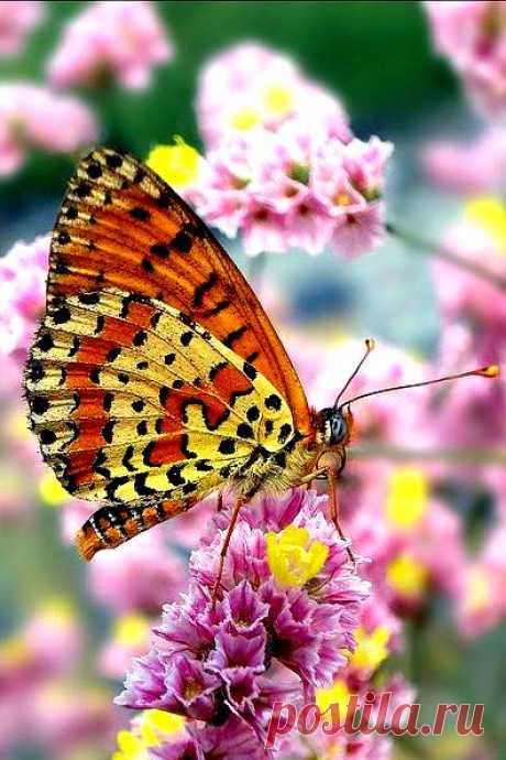 Просто жить недостаточно, – сказала бабочка, – надо иметь солнце, свободу и маленький цветок.. Ганс Христиан Андерсен