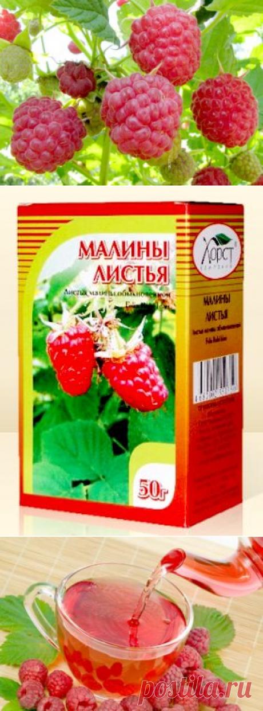 Малина - лечебные свойства, применение в народной медицине.