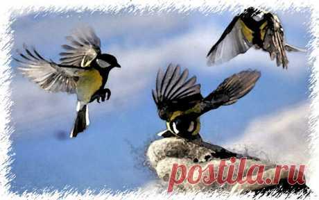 Покормили птиц зимой и случилось чудо - Смешные истории из жизни