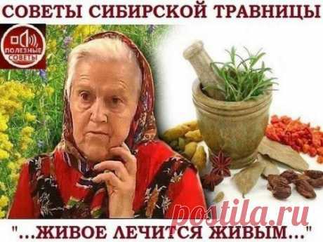 """Советы сибирской травницы. Живое лечится живым. - Елена Федоровна, почему лучше пить траву, а не принимать таблетку? - у меня был разговор с врачами: """"зачем вы лечите мертвыми таблетками? Там шлифовка, штамповка, красители, хим..."""