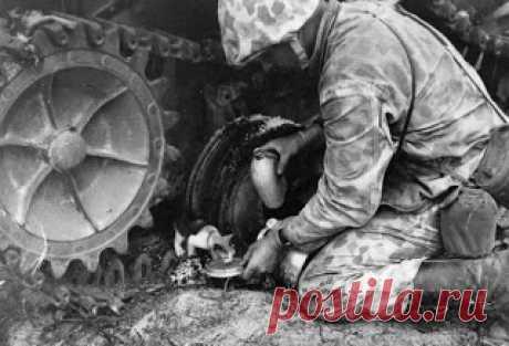 Морской боевой оператор Норман Хэтч помогает маленькому котенку, которого он нашел под японским танком на атолле Тарава