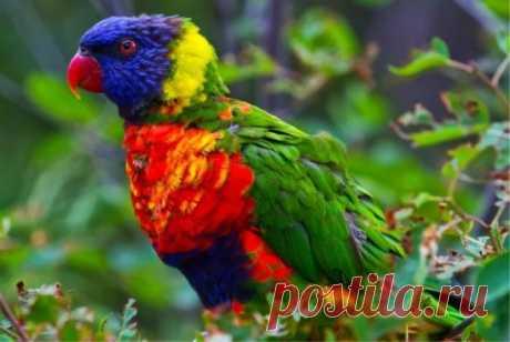 Самые красивые птицы . _________