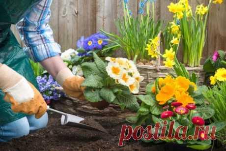 Посадите эти цветы осенью, и весной все соседи умрут от зависти!