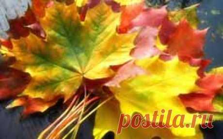 Четвертый выпуск журнала «Ароматы счастья» Вдыхаем осенние ароматы | Блог Ирины Зайцевой
