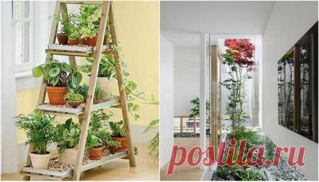Яркие идеи домашних мини-садов, которые принесут в жилище весну и уют | Мой дом
