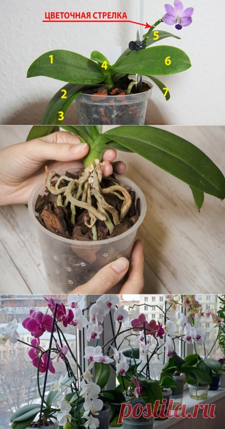 9 правил по уходу за орхидеей, благодаря которым она будет буйно цвести круглый год - My izumrud