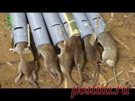 trampas para ratas versión 2 - chico inteligente crear nuevas trampas para ratas con tubos de PVC