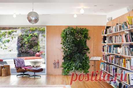 12 комнатных растений, рекомендованных для гостиной — Полезные советы
