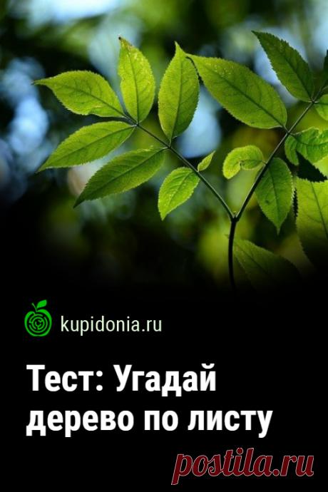 Тест: Угадай дерево по листу. Интересный развлекательный тест для знатоков деревьев. Проверьте свои знания!