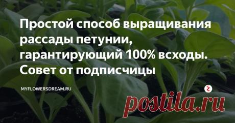 Простой способ выращивания рассады петунии, гарантирующий 100% всходы. Совет от подписчицы