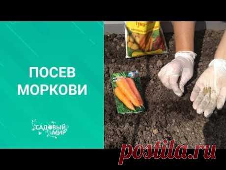 Подкормка моркови после посева. 🥕Почему растет двурогая морковь.
