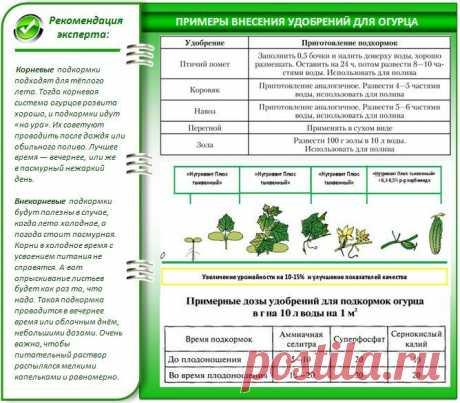 Огурцы Герман f1: описание сорта, характеристики, особенности выращивания, отзывы и фото