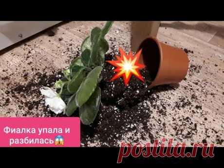 Пылесос для Фиалки