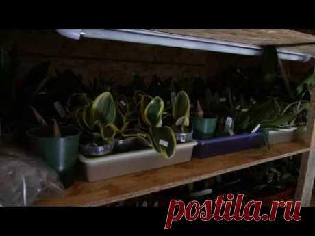 Отражатель света для орхидей.