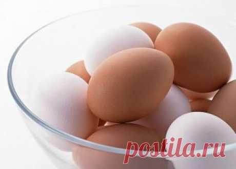 What to replace egg at preparation of the test with