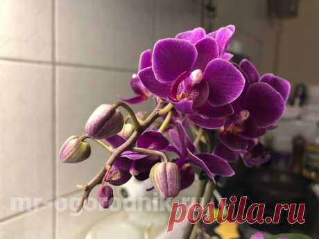 Уход за орхидеей зимой и осенью в домашних условиях Рекомендации по уходу за орхидеями осенью и зимой - полив и подкормка, влажность воздуха, световой день, температура.