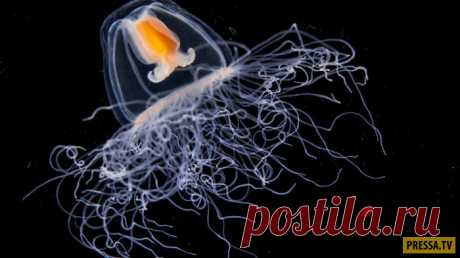 TOP-16 animals with surprising and unusual abilities (16 photos) whether | you Oh, damn Trust that on our planet there are animals who possess abilities, how at fictional heroes of comics and movies of the Universe Marvel? If you do not believe in existence of such beings, then here to you our list 1. The immortal jellyfish – can live forever. 25 years scientists try to crack a genetic code from Turritopsis dohrnii – a jellyfish who, seems never dies and can even make...