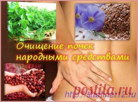 Очищение почек народными средствами в домашних условиях - ПолонСил.ру - социальная сеть здоровья - медиаплатформа МирТесен