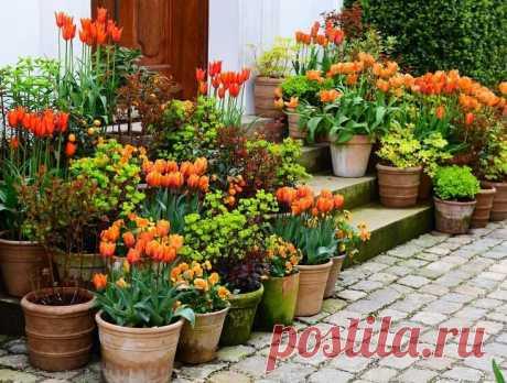 10 правил выращивания цветов в контейнерах, чтобы они красиво и пышно цвели | САД | Яндекс Дзен