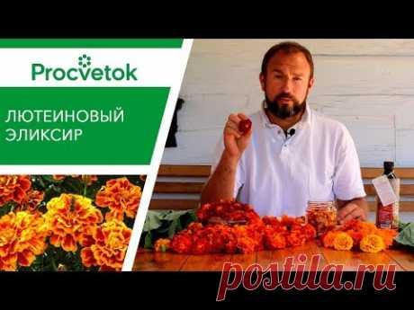 (297) Цветы бархатцы ДЛЯ ЗРЕНИЯ! Как сделать лютеиновую настойку. - YouTube
