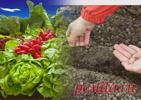 7 преимуществ подзимнего посева. Какие овощи и цветы можно посеять осенью | Пенсионерка из глубинки | Яндекс Дзен