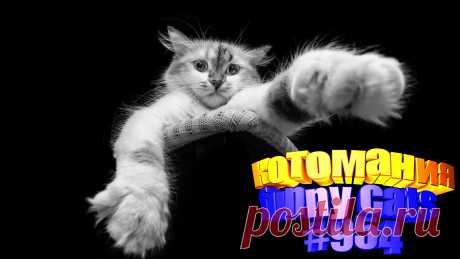 Любите смотреть видео про смешных котов? Тогда мы уверены, Вам понравится наше видео 😍. Также на котомании Вас ждут: видео кот,видео кота,видео коте,видео котов,видео кошек,видео кошка,видео кошки,видео о котах, видео про смешные, видео смешных кошек, говорящие коты, котов, кошка видео смешные, кошки, приколы котов, прикольные коты, ролики про животных, смешное котики, смешное про кошек, смешные коты