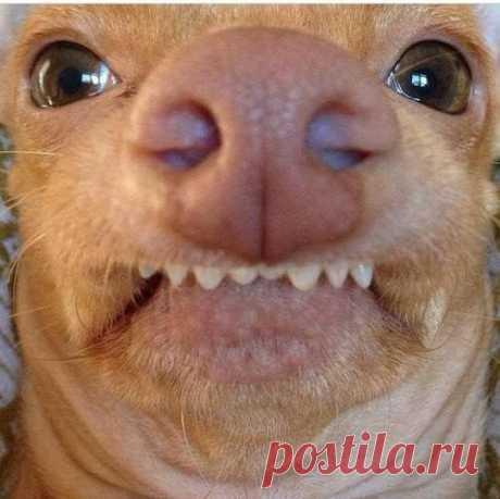 Из жизни собачек - самые неудачные моменты. От Михалыча! | 5минутка