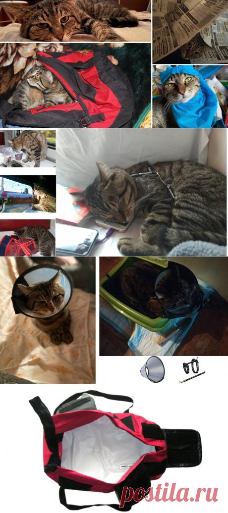 Как лечить кота, если он сопротивляется, какой метод я нашел. Делюсь своими результатами | Истории о людях | Яндекс Дзен