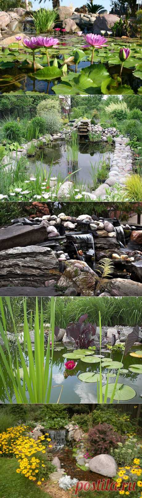 ПРЕКРАСНЫЕ САДЫ НА ВОДЕ.   Сады на воде, также известные как аква-сады, являются одной из разновидностей ландшафтного дизайна. Под водными садами понимают любой интерьер или экстерьер, а также архитектурный элемент, который соответствует главному критерию – наличие водных растений. И не важно, используется ли один вид растений или их комбинация. Кроме указанной специфической черты, водный сад также может включать в себя и пруд для разведения декоративных рыбок.