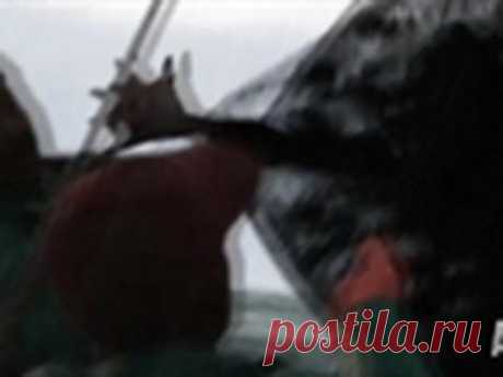 Unidentified Catch | Mermaids - YouTube