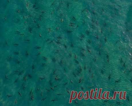 Пастух акул | Fresher - Лучшее из Рунета за день