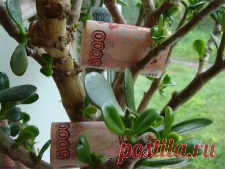 Денежное дерево: как посадить, чтобы разбогатеть в2016 году