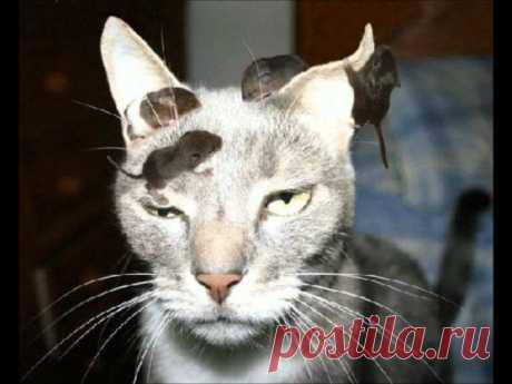 20 невероятно наглых, но забавных животных, которым наплевать на мнение окружающих — Позитив от Михалыча