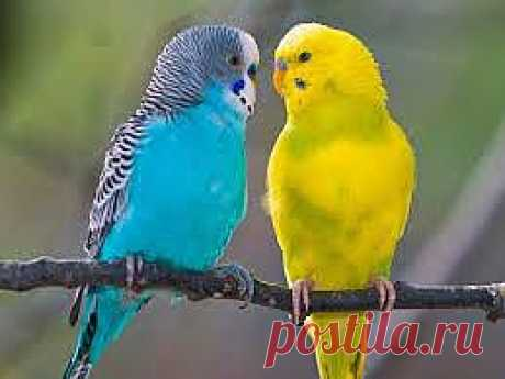 Выбираем попугайчика. Как купить здорового попугая? | Домохозяйки