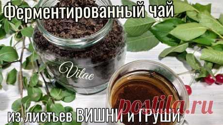 ФЕРМЕНТИРОВАННЫЙ ЧАЙ из листьев ВИШНИ и ГРУШИ простой рецепт в домашних условиях. В этом видео готовлю ферментиртванный чай в домашних условиях из листьев вишни и груши.Рецепт простой ,а результат просто шикарный.Такой чай имеет темный цве...