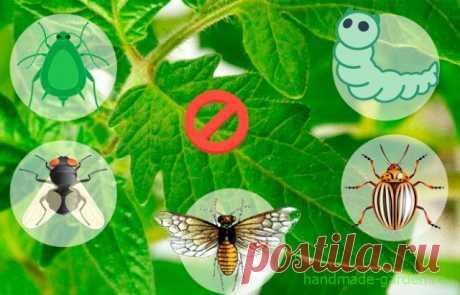 Томатная ботва: как применить растительный отход с пользой