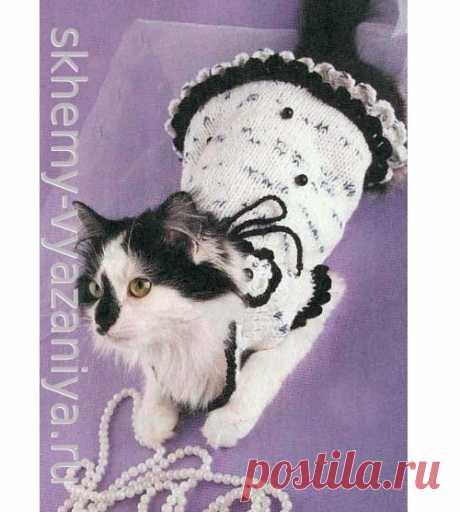 Черно-белое платье с цветком и бусинами для кошки. Схема вязания спицами и описание.