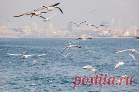 Стамбул. Чайки | VeniVidi.ru