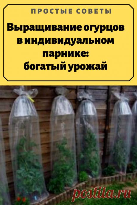 Выращивание огурцов в индивидуальном парнике:богатый урожай.Индивидуальный парник это отличное приспособление для экономии места на дачном участке. Выращивание по такому способу позволяет не только экономить место,но и выращивать огурцы почти у дома.