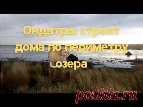 Домики ондатры по периметру озера напоминают  виллы на берегу моря - YouTube