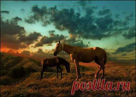 Красивые фото лошадей Юрия Марта | ZOODOM