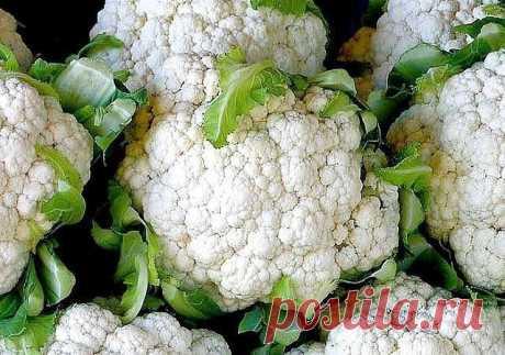 Сохраните информацию! Как получить большой урожай цветной капусты | 6 соток