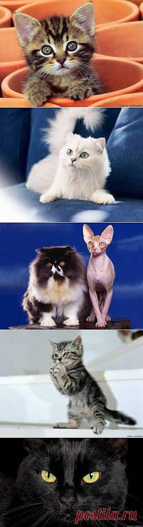 Красивые Кошки котята коты картинки - 1104 фото обои на рабочий стол галерея 1 - Фото мир природы
