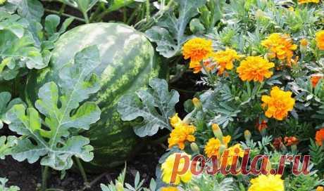 26 растений, которые всегда должны расти бок о бок на одной грядке | Днепр Час