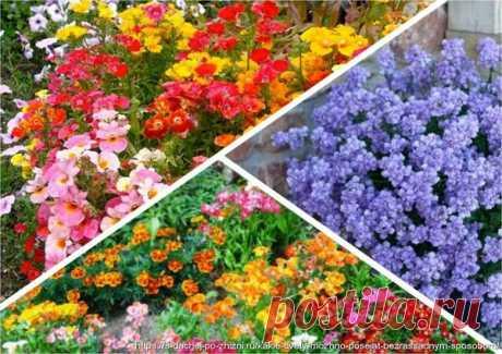 Какие цветы можно сеять прямо в грунт в июне?   6 соток
