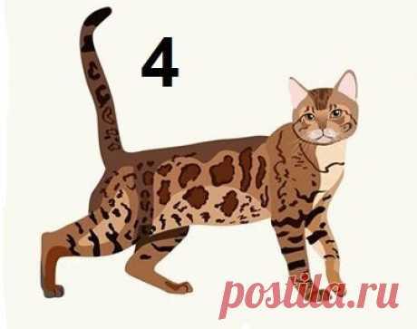 Тест: Выберите кошку и узнайте, что ваш выбор говорит о вашей личности | Невероятный | Яндекс Дзен