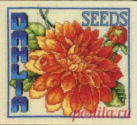 Gallery.ru / Фото #11 - Цветочные семена - Clematis